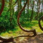 Gryfino e la foresta misteriosa.