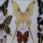 L'uomo che sussurrava alle farfalle